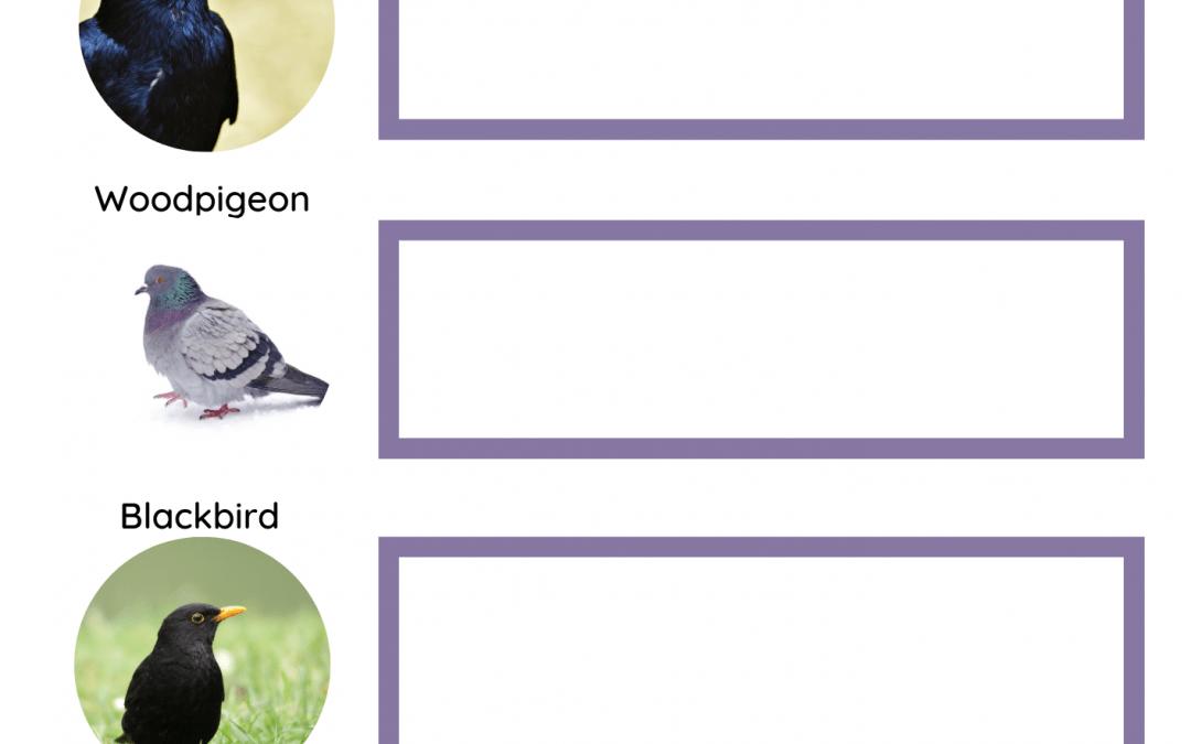 Bird Spotter Activity Sheet