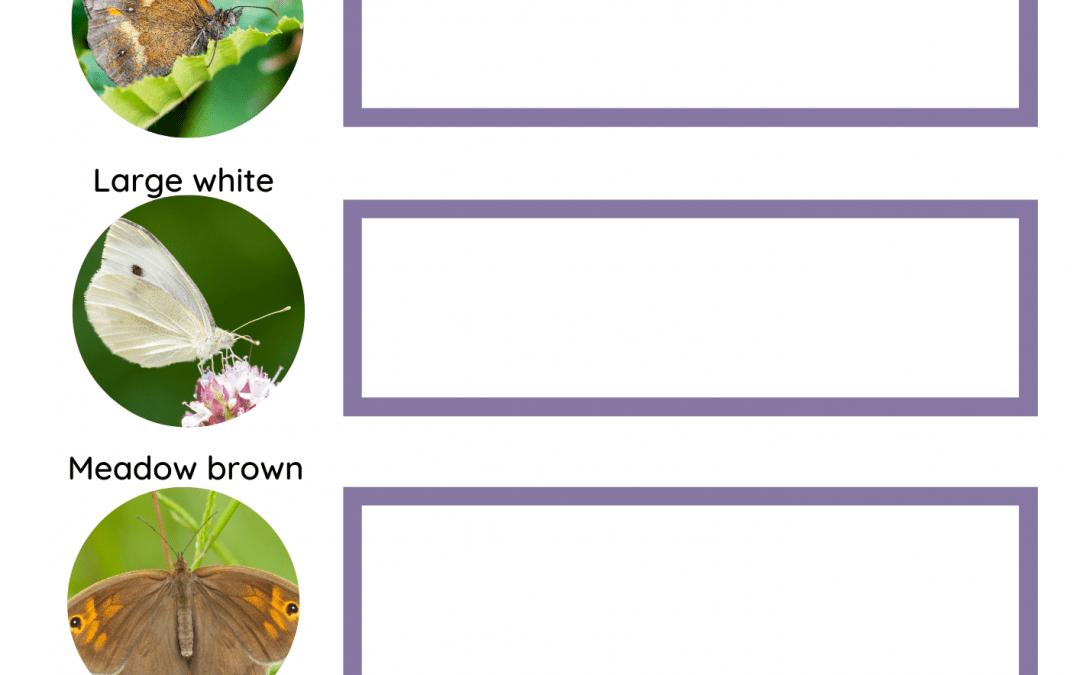 Butterfly Spotter Activity Sheet