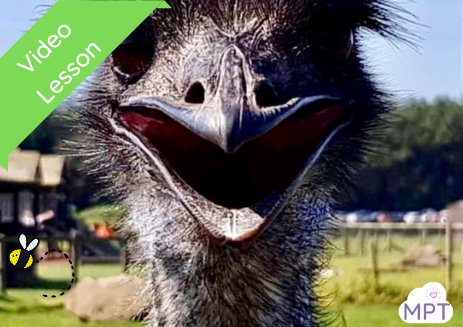 Let's Learn About Emus! (Farm Park Resources)