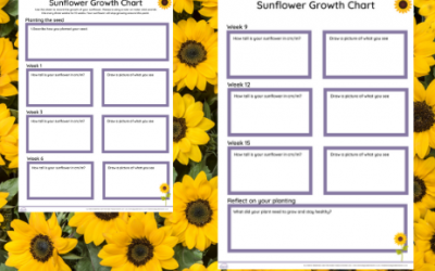 Sunflower Day Growth Chart – EYFS/KS1