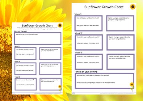 sunflower day growth chart
