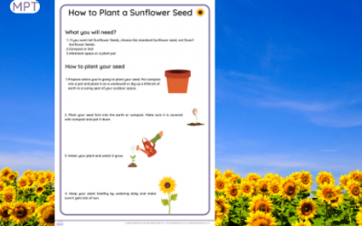 Sunflower Day: How to Plant a Sunflower Seed (Instructions)