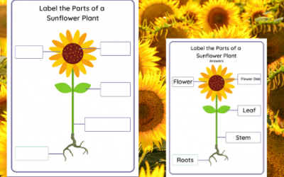 Label the parts of a Sunflower